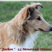 Farkon12-Farkon-Kopf-seitlich-5-5-Monate-2350-Mittlere-Webansicht