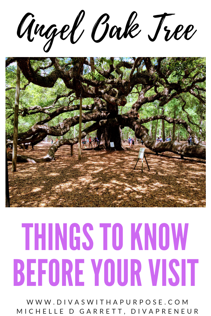 Things to Know Before Your Visit to the Angel Oak Tree