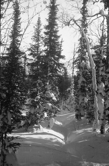 Dyatlov pass 1959 search 49