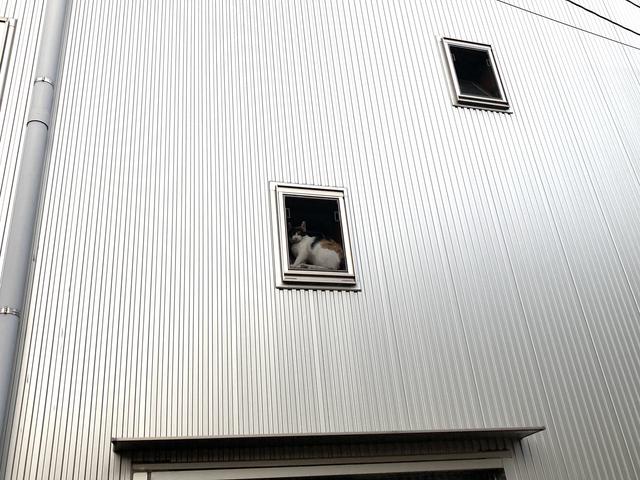 在窗口的中休息的貓看起來就像是美術館的畫一樣w Image