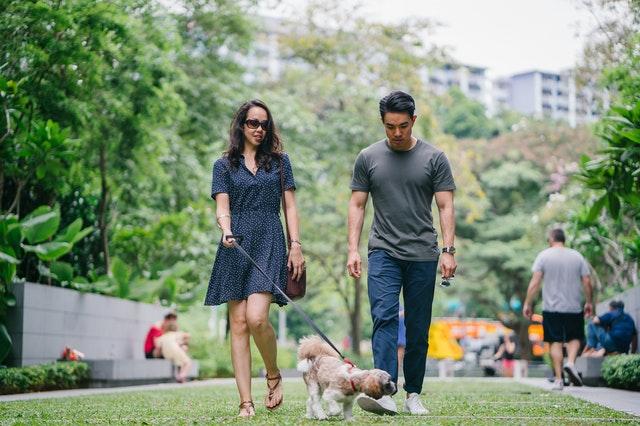 https://i.ibb.co/PtyFHhP/lovely-dachshunds-puppies.jpg