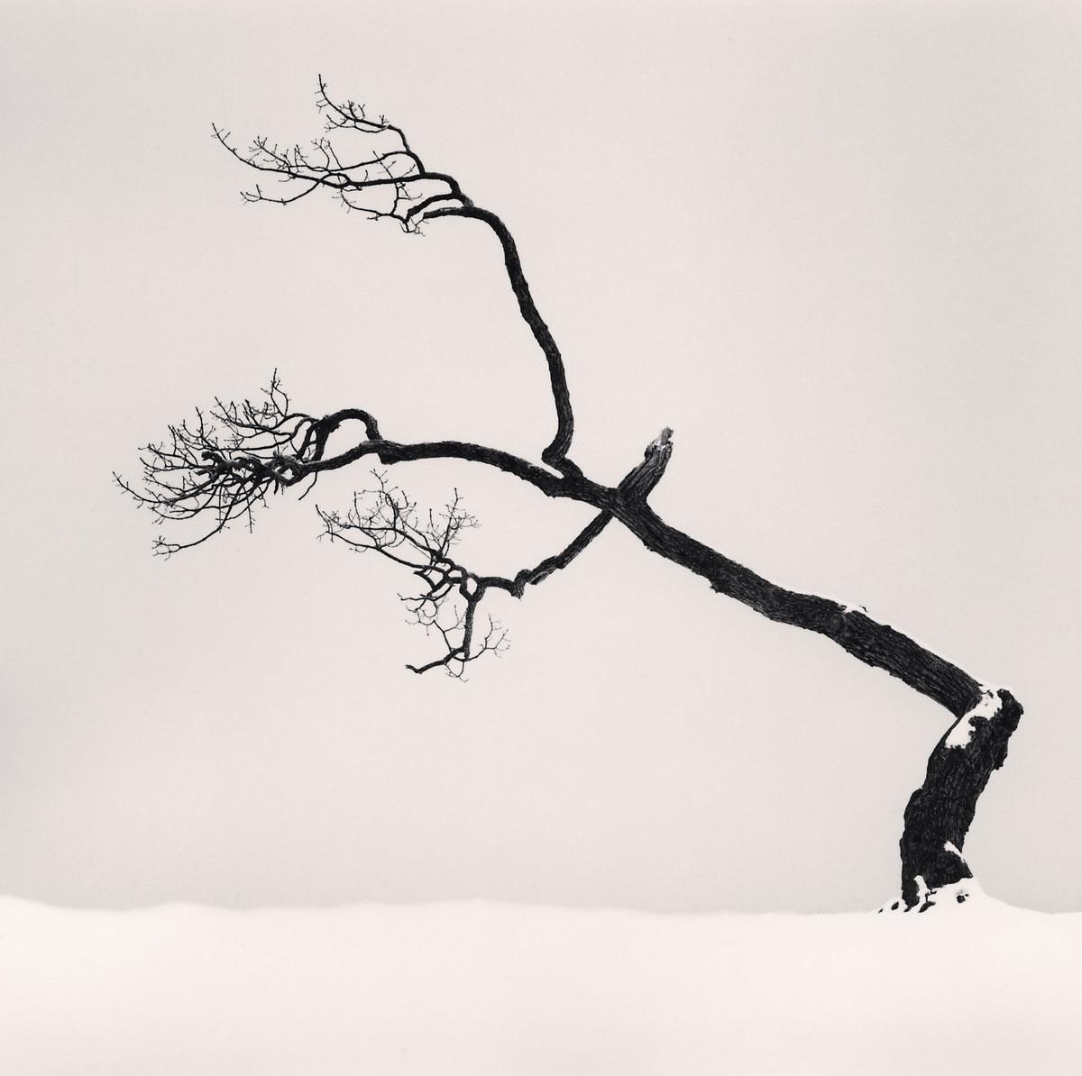 Портреты деревьев Майкла Кенны 11