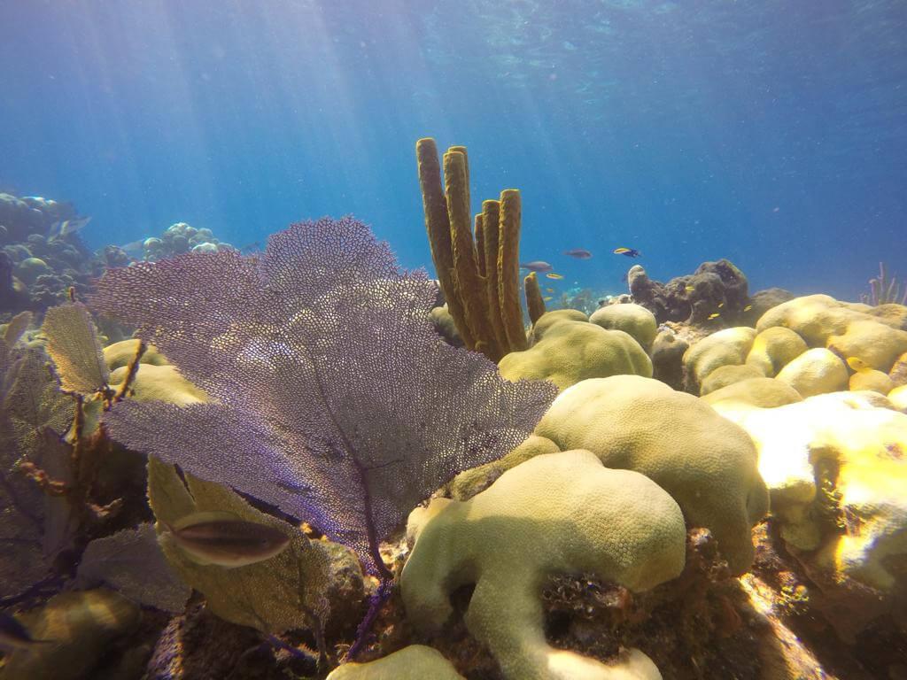 Scuba Diving Bavaro