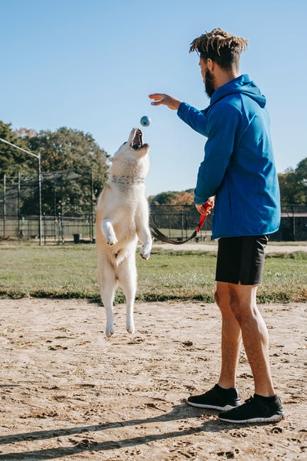 When Should I Hire a Trainer for My Dog?