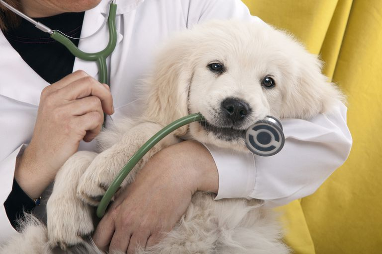 What Does A Veterinarian Actually Do?