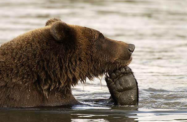 Медведи, такие медведи-35