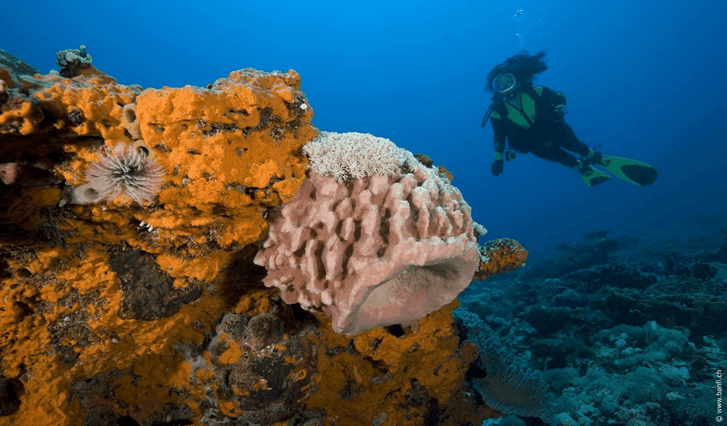Diving World Championships