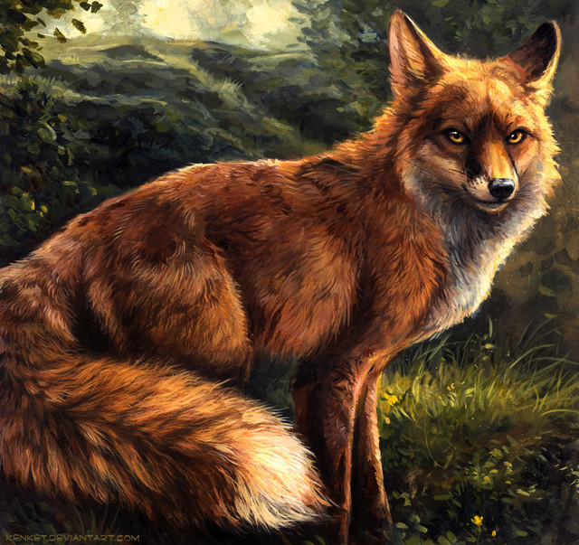 Fox-2.jpg