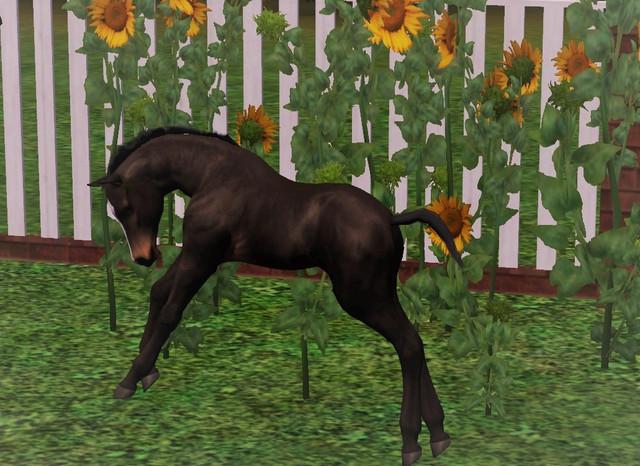 selene-foal