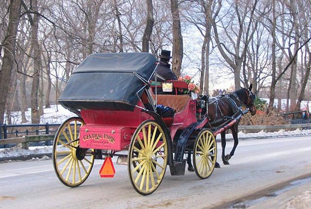 Horse riding New York city.jpg