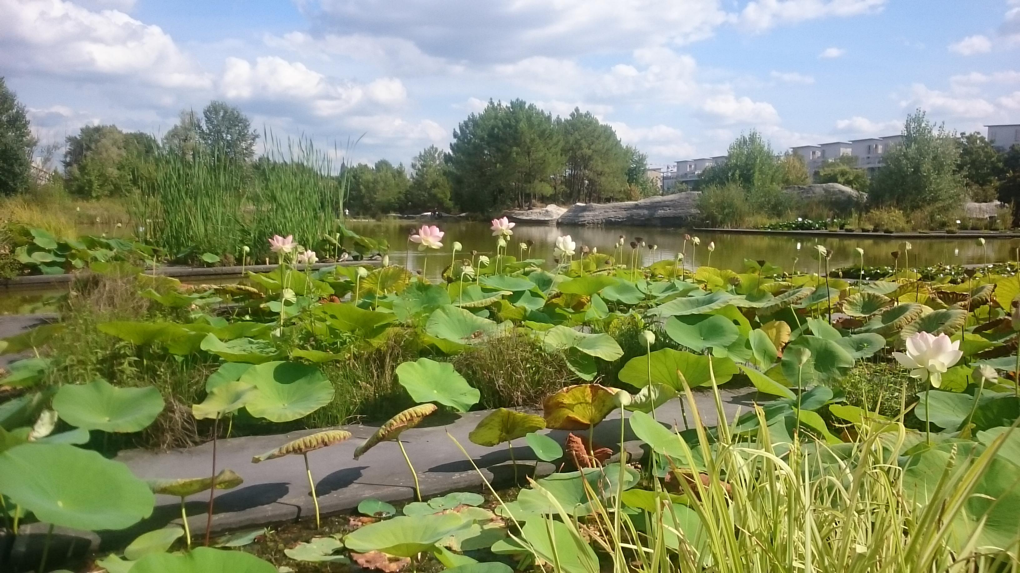 Le jardin botanique à la Bastide