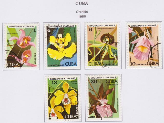 Cuba Orchid 001