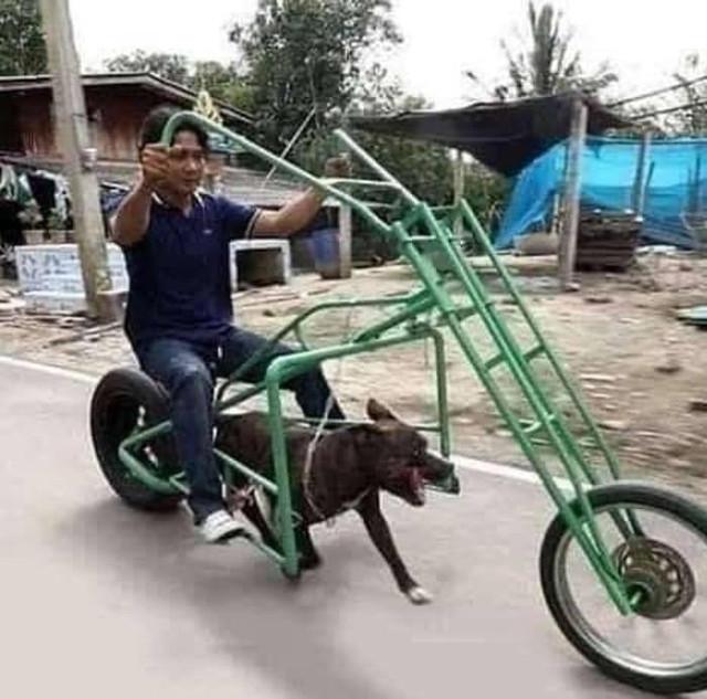 dog-chopper