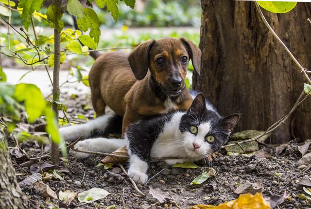 Perrito y gato malandro