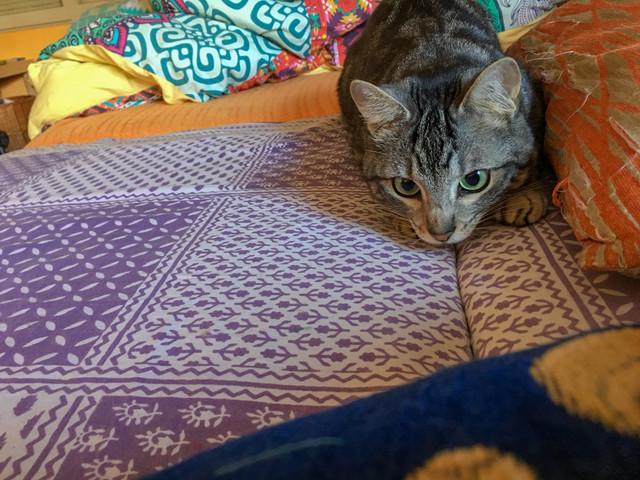 Baloo adoptado en Vitoria 002-2019-02-14