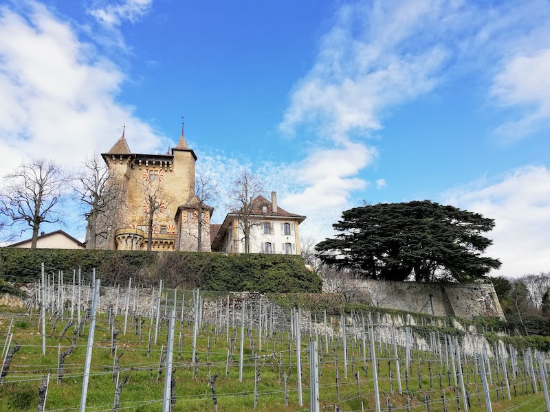 View on the castle from the vineyard below