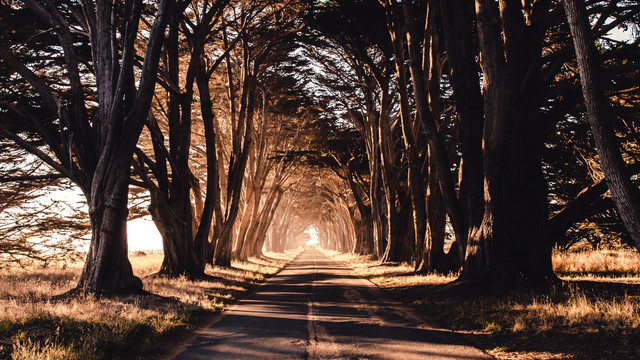 road-trees-shadow-119606-1280x720