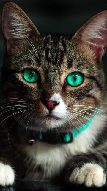 beautiful-cat-46