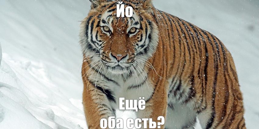 tigor.jpg