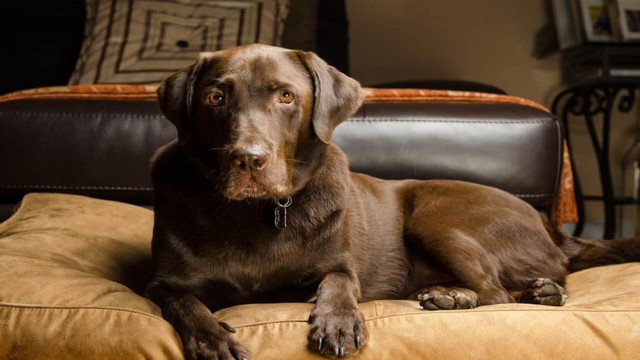 Large Dog Beds: Which is the Best of 2021?