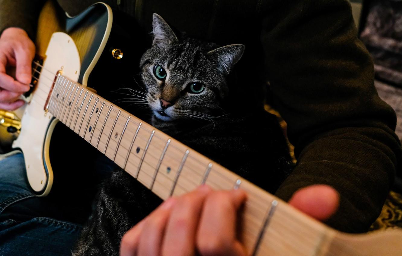 kot-khoziain-muzykant-gitarist-gitara-igra-ruki-muzhchina-fa.jpg