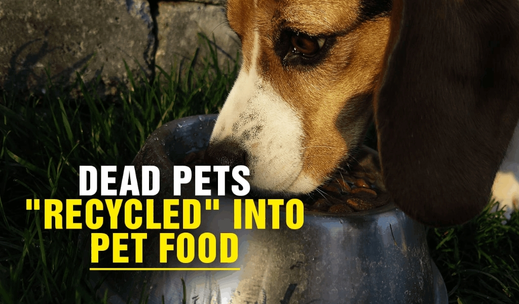 Celluloid Pet Food