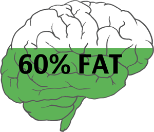 https://i.ibb.co/Qn8fh0r/60greenbrain.png