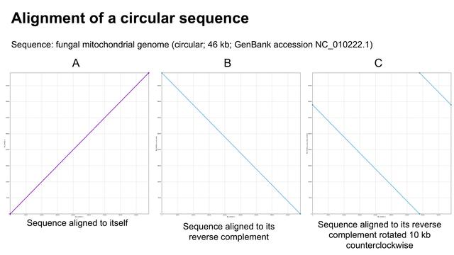 circular_sequence_alignment
