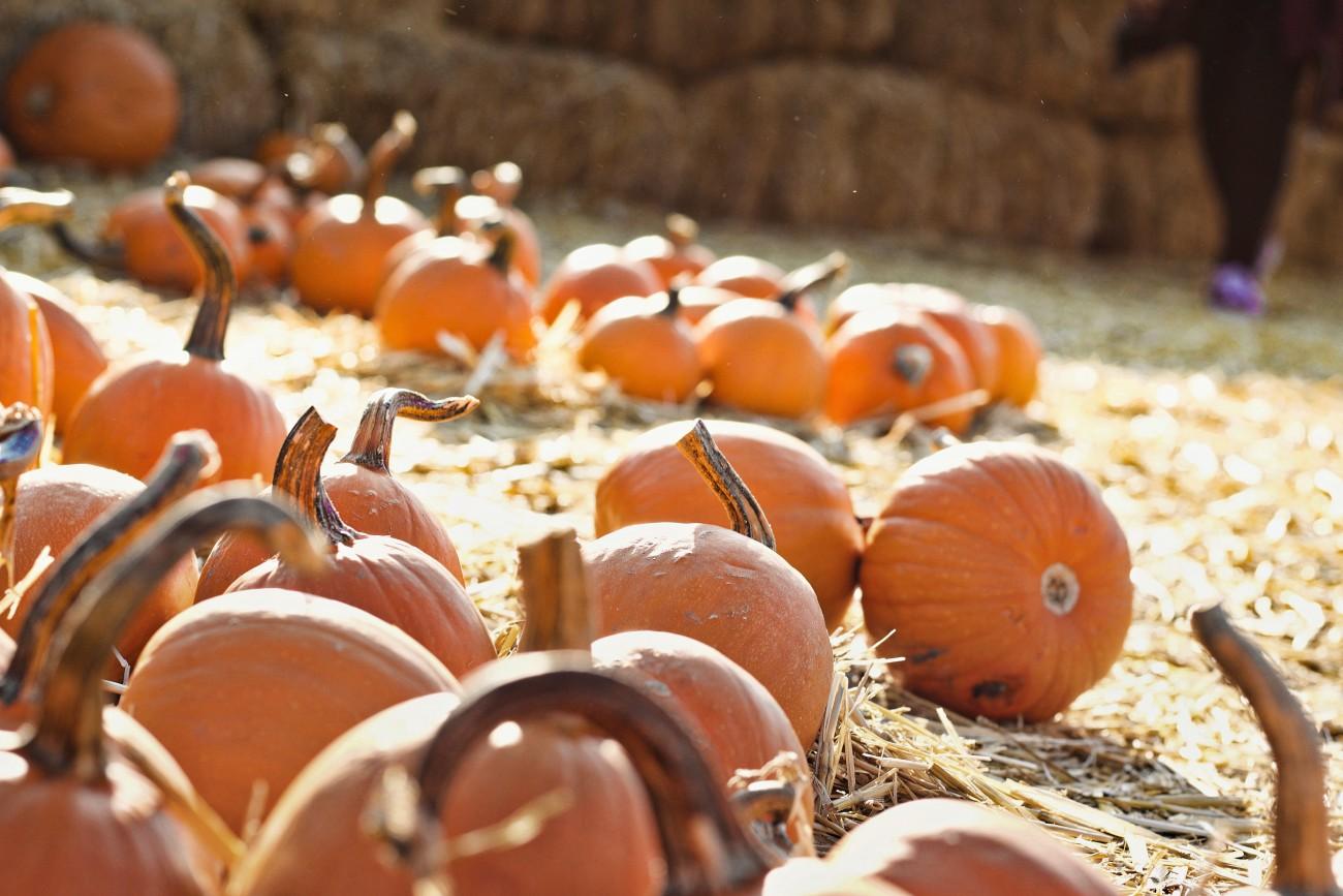 Pumkin picking at Hallowe'en, October events in Scotland