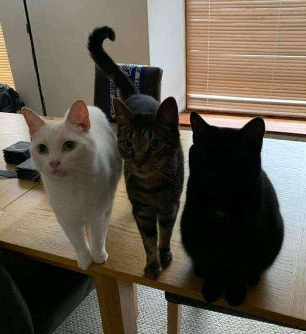 Черный кот еще не разблокирован, пройдите два предыдущих уровня сложности