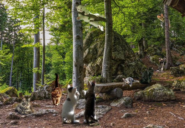 Cats-Playground
