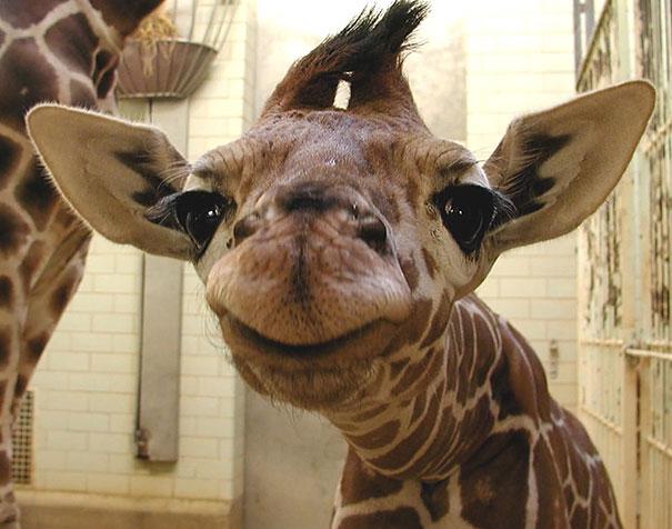 30 фотографий самых счастливых животных на планете-11