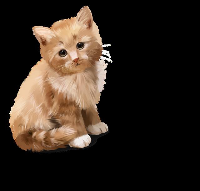 CatDog-3.png
