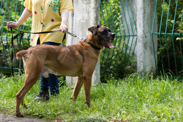 Москва, Веретт, кобель 17.06.2012 г.  - Страница 2 Dogs-140