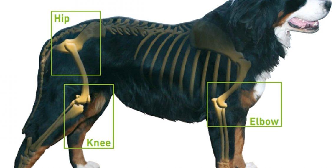 So helfen Sie Ihrem Hund bei Arthritis