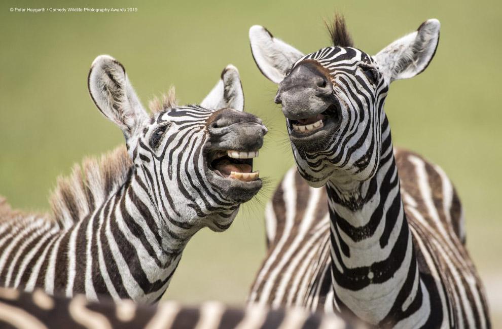 Фотографии финалистов Comedy Wildlife Photography Awards 2019