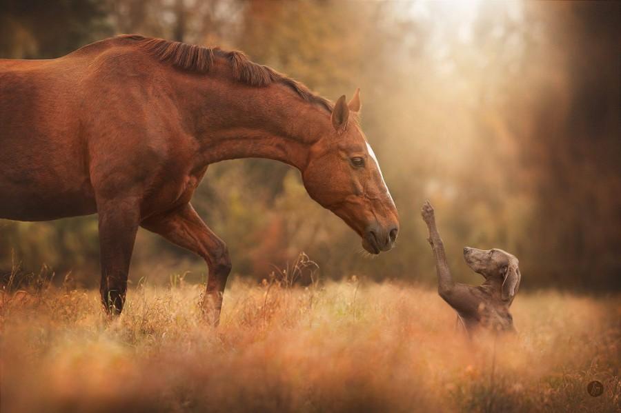 Топ 10 фотографий животных за 2014 по версии сайта 500px