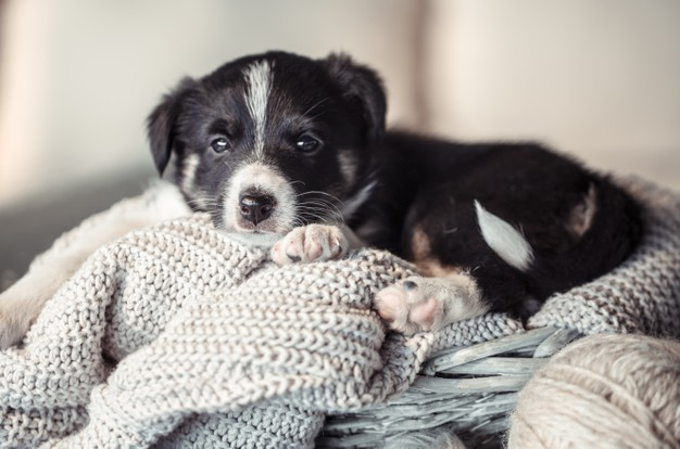 5 Crystal Clear Signs The Depression Has Got The Better Of Your Dog