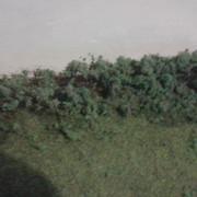 Gantsville-bushes