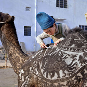 Japanese-hairdresser-Megumi-Takeichi-cuts-patterns-into-the-hair-of-a-camel-ahead-of-the-Bikaner-Cam