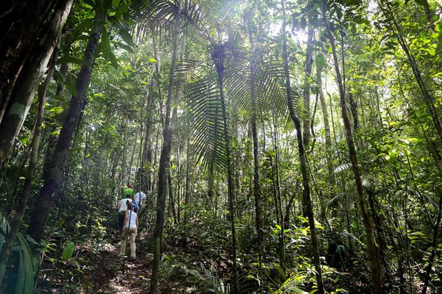 Amazonia-Jorge-Metne