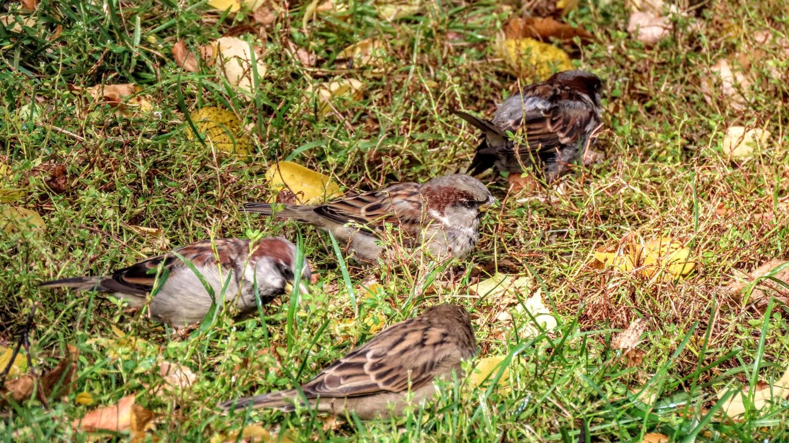 Зеленоглазый и птички 35846515
