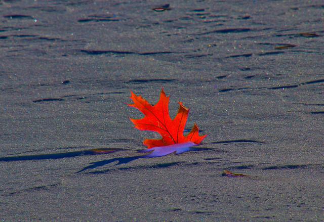 13-Nov-2019-Icy-Shore-smaller-55.jpg