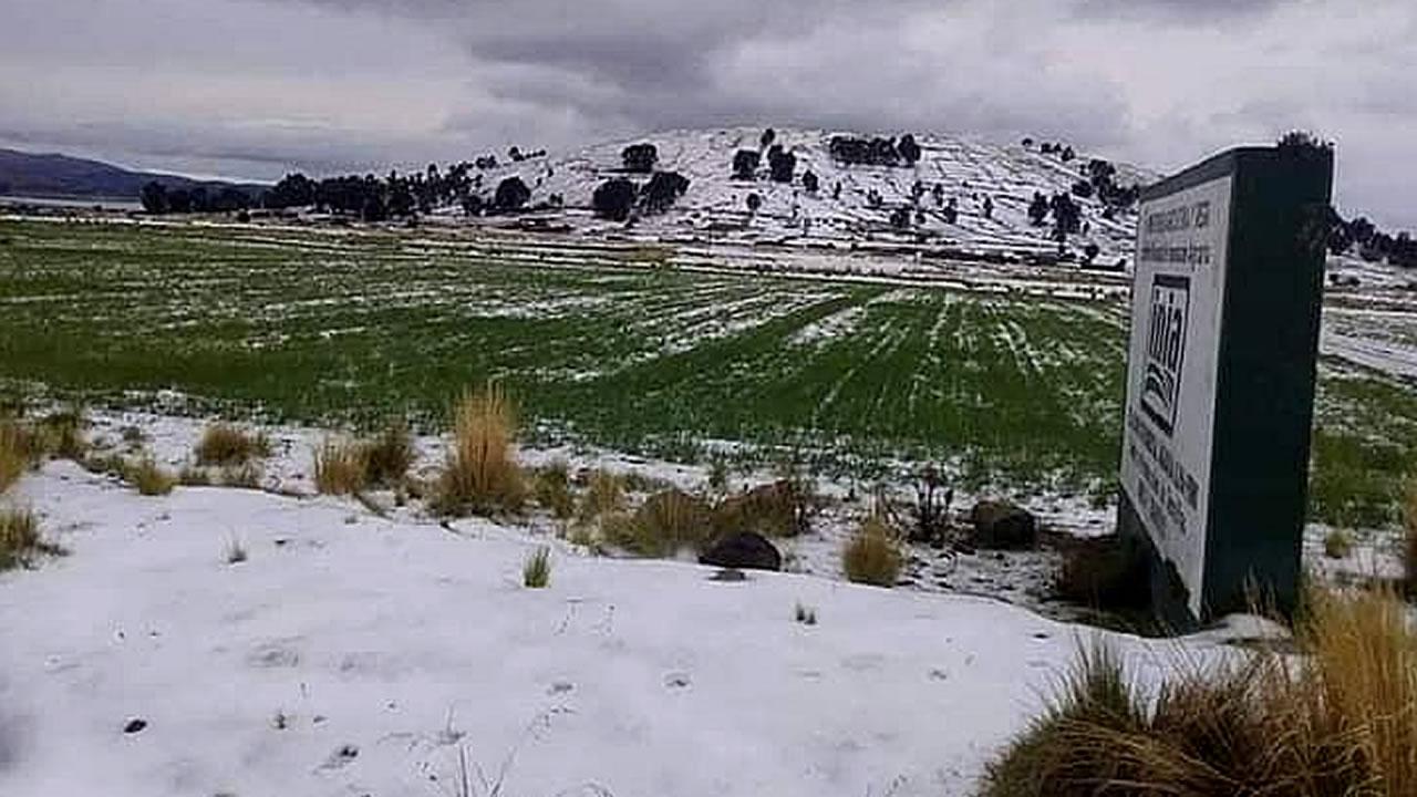 Granizada afecta cientos de hectáreas de cultivo en Yunguyo