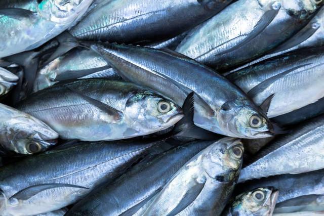 4 Manfaat Mengejutkan bagi Kesehatan dari Mengkonsumsi Ikan