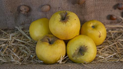 ვაშლი გოლდენი (500 გრამი)