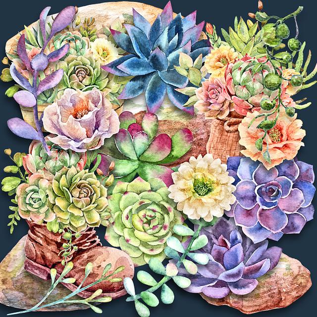 Succulents-watercolor.png