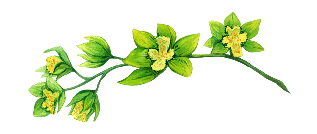 Green-orchid.png