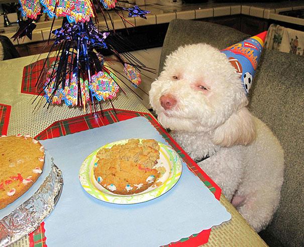 30 фотографий самых счастливых животных на планете-18