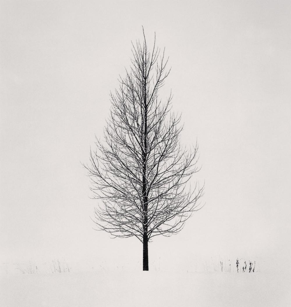 Портреты деревьев Майкла Кенны 25